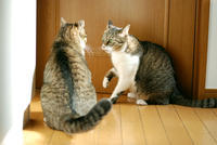 猫パンチ - サバとタラ