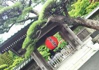 二分咲き紫陽花 in 長谷寺:新参者の kamakura walk - al mare 気ままにmamma (たまにnonna)