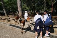 鹿と人のいる風景 2 - aco* mode