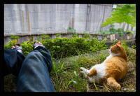猫の田中さんと - テストブログ