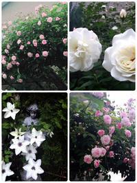 Today's Garden - ENC M's GARDEN