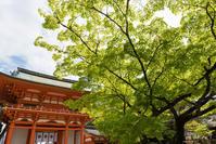 京都の新緑 2017 〜今宮神社〜 - ◆Akira's Candid Photography
