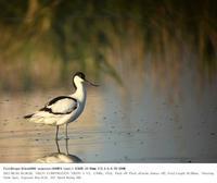 2017.6.3(1) - 鳥撮り遊び