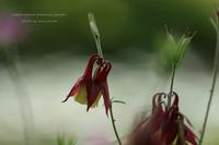 六甲高山植物園 etosetora - 静かな時間