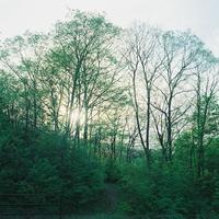 森歩きな気分。 - SunsetLine