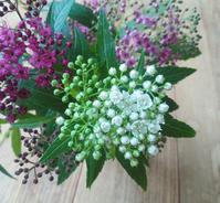 シモツケの花咲く… - 侘助つれづれ