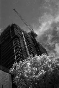 2017年6月10日 白い街路樹と黒いビル - Silver Oblivion