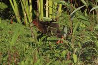 オオムシクイ日和 - 野鳥写真日記 自分用アーカイブズ