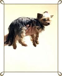 飛行犬 - わんころ日誌