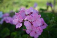 ELMARITの旅の花々 - アンチLEICA宣言
