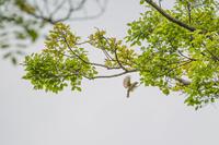 その他の鳥(普正寺の森)と夜の茶屋街 - 夫婦でバードウォッチング