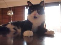 猫たちのGW-その4、足袋子編 - 亜麻仁
