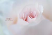 薔薇の残り香 VOL.02 - 君に届け