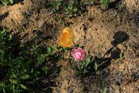 花は、咲く - memory