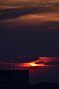 朝の光と大淀川 (^o^) - 犬連れへんろ*二人と一匹のはなし*