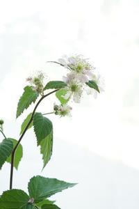 プチプチフォイヤジスト計画(^^♪ - お花に囲まれて