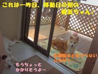 春菜ちゃん、移動しました! - もももの部屋(家族を待っている保護犬たちと我家の愛犬のブログです)