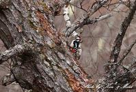 高原で会えた鳥達^^ 一挙公開 (*^^*)♪ 世界遺産も♪ - ケンケン&ミントの鳥撮りLifeⅡ
