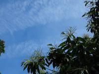 山裾デジブラ散歩の空とラミチャンカミキリ?? - 空と雲,季節の風と光と・・・景色