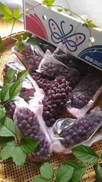 島根ぶとうデラウェア - 料理研究家ブログ行長万里  日本全国 美味しい話