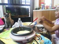 おはようございます。 - MINKWIN Cattery &Pretty Aki