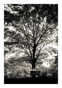 代々木公園 - VELFIO