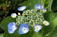 FLOWERS -7 - Genie