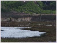 尾瀬散歩-7   073)    - 趣味の写真 ~オリンパスE-M1MarkⅡとE-M1、E-5とたまにフジフィルムXZ-1も使っています。~