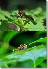 庭に来る苦手な虫 - 趣味を楽しみながら