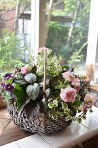 6月の寄せ植え教室のお花はニチニチソウ・ブラックベリー - 小さな庭 2