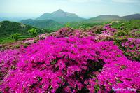 咲くべき場所に咲く花 - 憧憬の九重Ⅱ