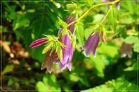 初夏の花咲く桜庭 - 気ままにデジカメ散歩