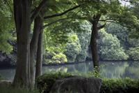 「水辺の緑」 - hal@kyoto