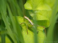 草陰に潜む - M2_pictlog