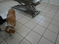 六月六日、稽古はじめの善き日に、 - 『ココんちの(3+1)+1+1猫と一犬のたわごと』 (2+1)+1+1 Pitchouns et 2 Pitchounettes