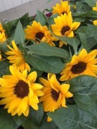 花苗・鉢入荷しました!! - ~ Flower Shop D.STYLE ~ (新所沢パルコ・Let's館1F)