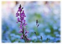 ◆中々、アップ出来なかった昭和記念公園の景色( '-' )= - ☆彡ちいさな幸せ☆彡別館
