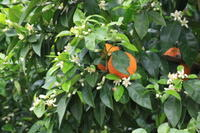 橙のお花 - 都忘れと忘れな草