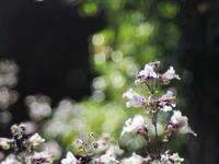 ハーブ園の花たち 2 - 光の音色を聞きながら Ⅱ