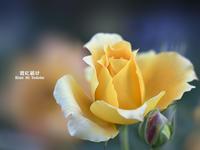 薔薇の残り香 VOL.03 - 君に届け