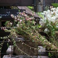 梅雨に入る予感・・・ - misaの庭暮らし~Abandon~