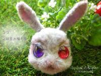 ココの顔 植毛2回目 - アコネスのおもちゃ箱 ぽつぽつ更新ブログ