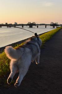 朝の光と大淀川(つづき)(^o^) - 犬連れへんろ*二人と一匹のはなし*