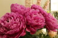 芍薬 - 北赤羽花屋ソレイユの日々の花