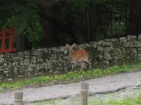 鹿 - 日光を漂ふ