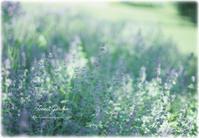 初夏の日差しの中で* - Forest Garden