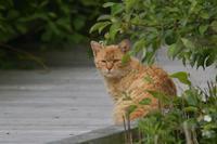 猫とシマリー - やぁやぁ。