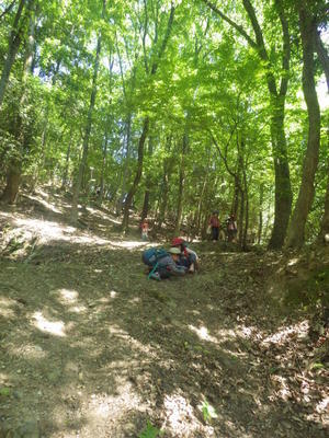 おやこクラス森遊び6月のビジター参加のご案内 - 宝ヶ池森のようちえんどろんこ園・子育ての会
