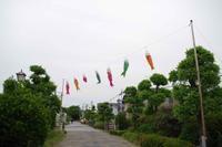 2017.5.15 遊歩道の鯉のぼり - 下手糞PHOTO BLOG