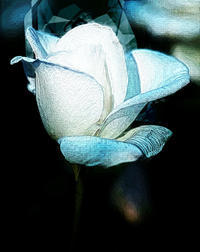 バラ 11(PhotoShop ) - 光 塗人 の デジタル フォト グラフィック アート (DIGITAL PHOTOGRAPHIC ARTWORKS)